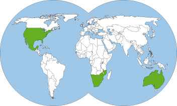 World-map-Myrmecocystus-mexicanus-Honey-pot-ant
