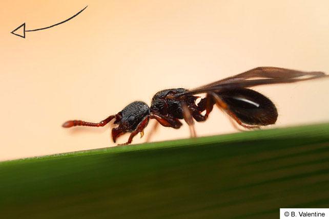ant-life