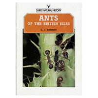 ants_of_the_british_isles