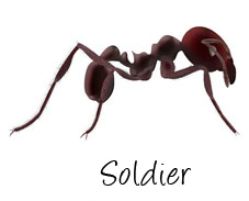 major-worker-ant-labeled