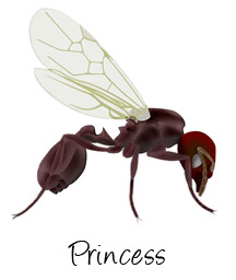 princess-alate-ant-labeled