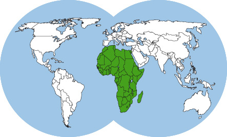 ants-of-africa-world-map