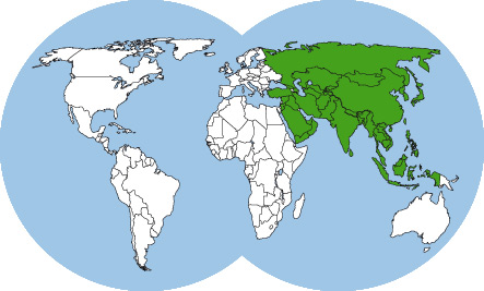ants-of-asia-world-map