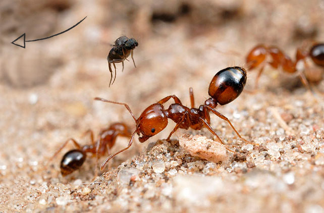 bio-control-ants-pests-solutions