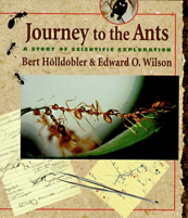 journey_to_the_ants
