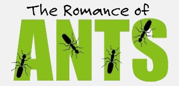 the-romance-of-ants